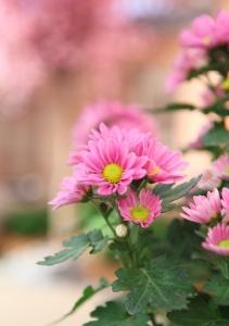 1334750_pink_flowers_2.jpg